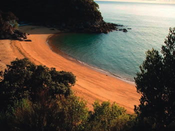 nz beach scene